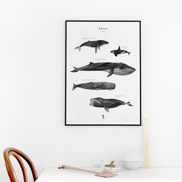 Affiche poster baleine, KETOS