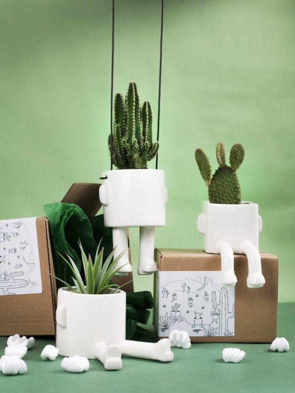 Lot de 3 caches pots, cactus, succulentes